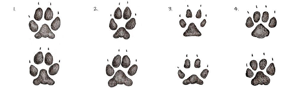 Tracce di animali - impronte di canidi