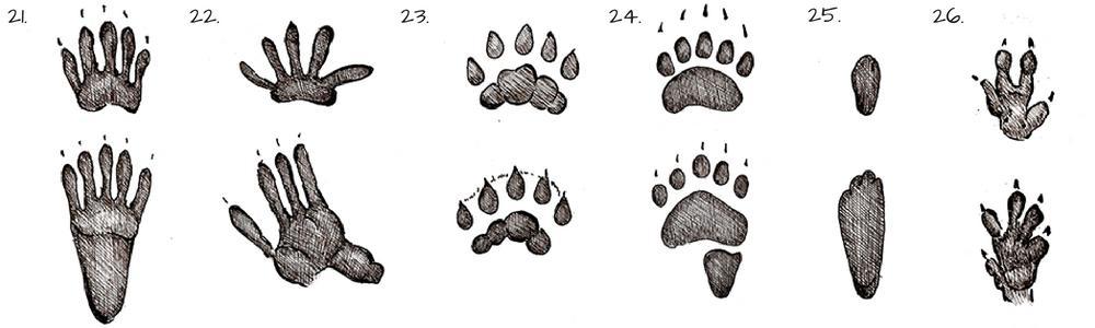 Tracce di animali - impronte di piccoli mammiferi