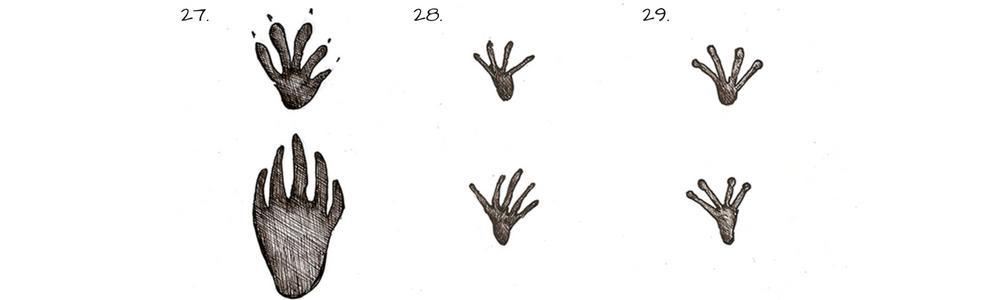 Tracce di animali - impronte di rettili e anfibi