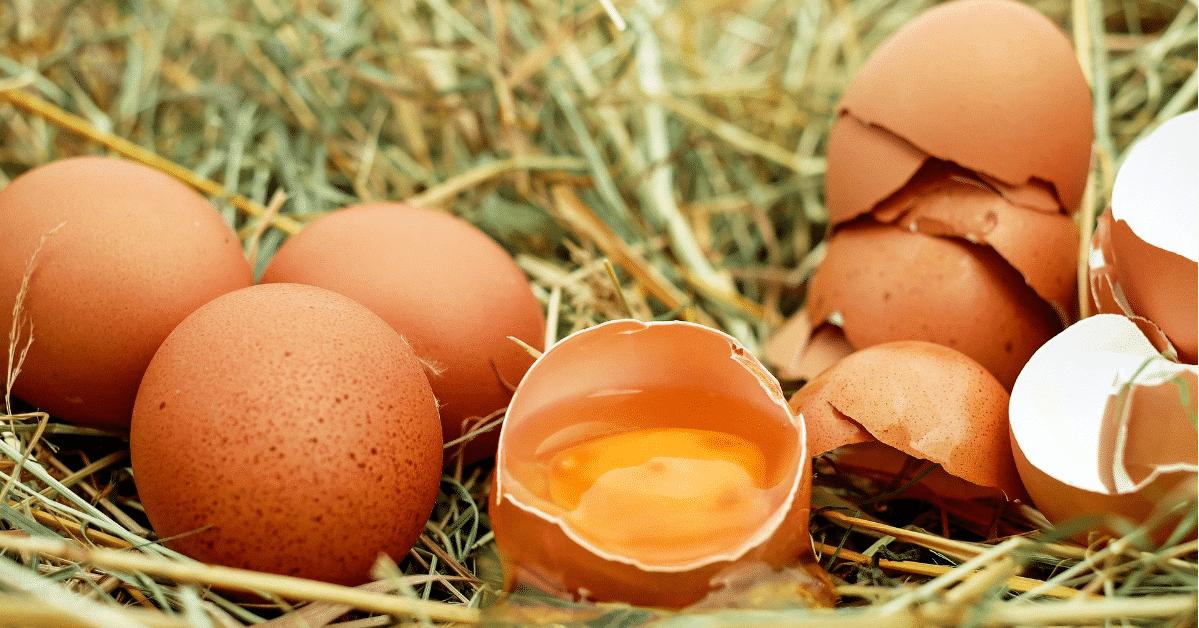uova sopra paglia con uovo centrale aperto - uova disidratate