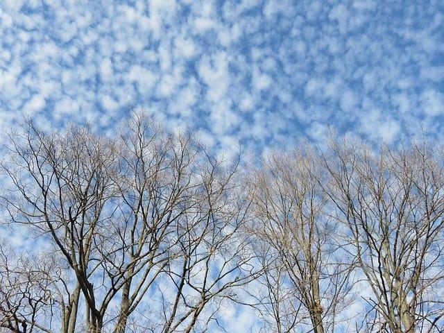 altocumuli nuvole - prevedere il tempo - previsioni del tempo